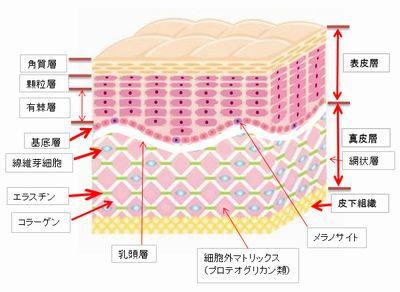 50歳からでも間に合う肌ケア最初に皮膚構造について覚えてください。カテゴリー私と一緒に肌ケアをしませんかシミ予防・シミ取りにマッサージジェルオールインワンゲル体の中からキレイにタグスポンサードリンクカテゴリーメタ情報ランキング